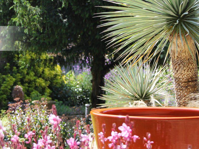 poterie vernie orange avec yucca rostrata et vivaces colorées